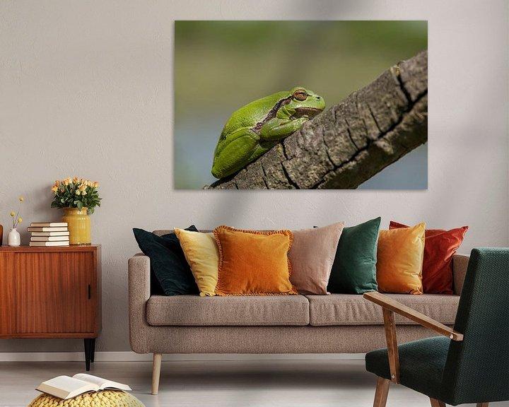 Beispiel: treefrog von Eelke Cooiman