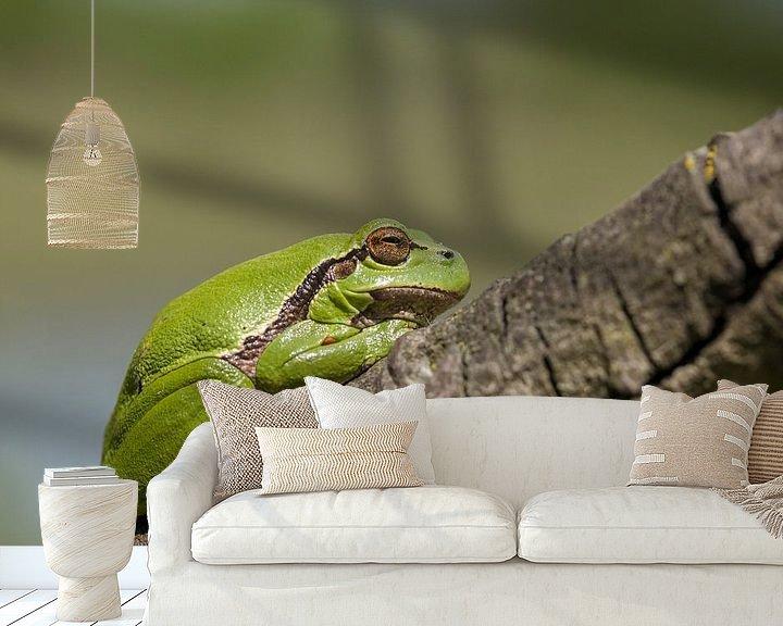 Beispiel fototapete: treefrog von Eelke Cooiman