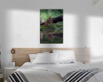 Lief eekhoorntje :-) sur Henk v Hoek