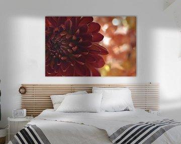 Chrysantheme von zwergl 0611