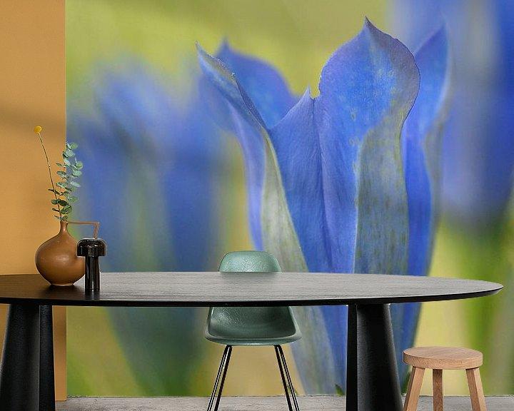 Beispiel fototapete: Klokjesgentiaan von Astrid Brouwers
