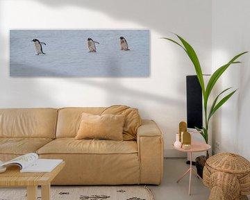 vieze pinguïns op weg naar de zee voor eten van Eric de Haan