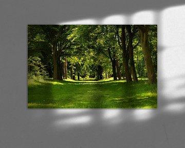 Bosgebied Nijenburg te Heiloo