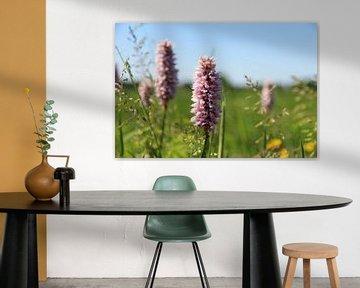 Blumen von Fotografie Sybrandy
