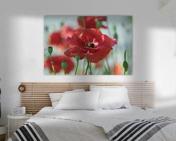 Poppies artwork van Tanja Riedel