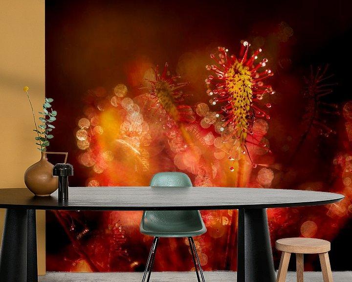 Sfeerimpressie behang: Kleine zonnedauw van Erik Veldkamp