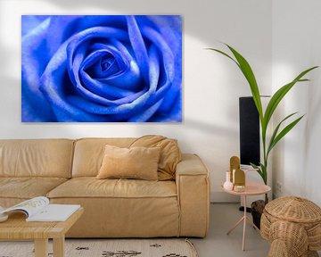 Blauwe roos close-up. van Lorena Cirstea