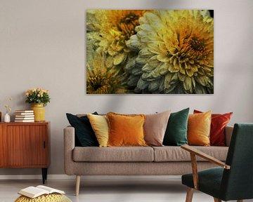 Chrysanthemen von zwergl 0611