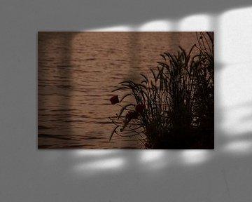 Klaprozen bij zonsondergang. Poppies at sunset. van Helma de With