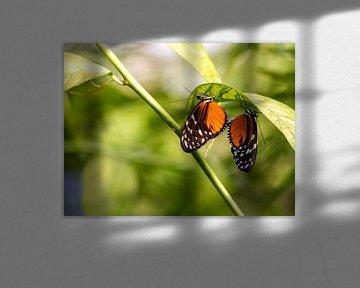 Twee vlinders van Marco de Waal