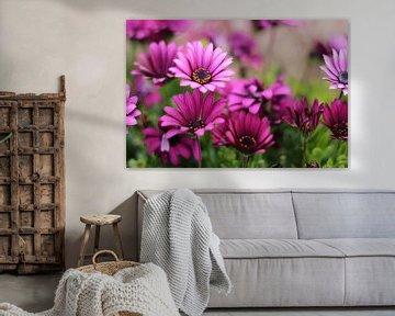 Purple flowers von Selma Hamzic