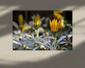 Yellow flowers von Selma Hamzic