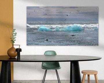 Seal Terns Ice Sea van BL Photography