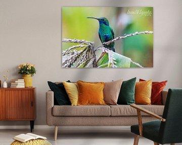 Colibri von Kevin Van Haesendonck