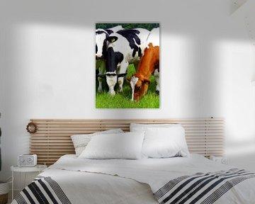 Grazende koeien. sur Joke Schippers