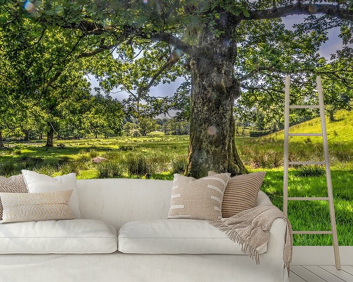 Sfeerimpressie behang: Boom in het Lake District van Frans Blok