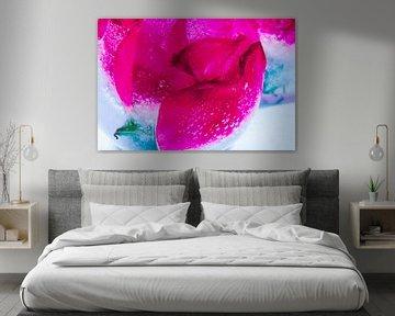 Wild roses in ice 3 van Marc Heiligenstein