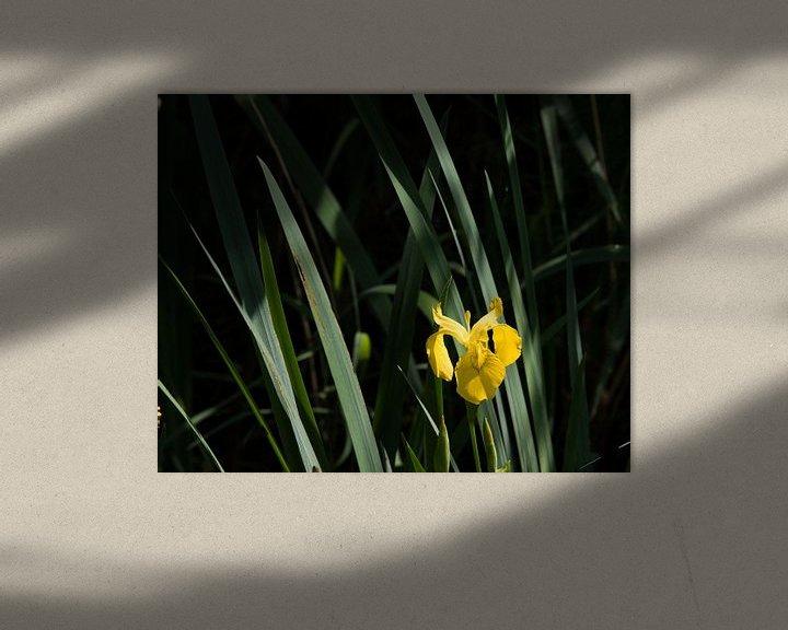 Sfeerimpressie: Like an Orchid van Hans Krijnen