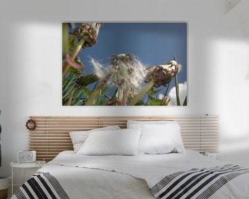 de Paardenbloem, the dandelion, der lowenzahn, le dent de lion, taraxacum von Yvonne de Waal Malefijt