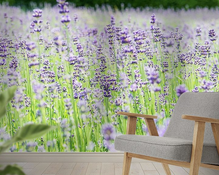 Sfeerimpressie behang: Zomerse lavendel van Ratna Bosch