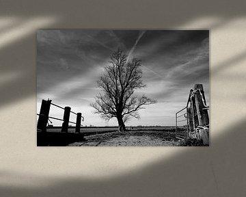 The Lone Tree von Peter Bongers