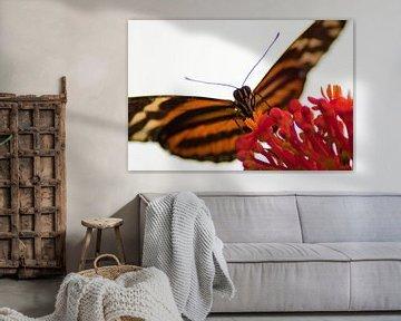 butterfly kisses van thijmco rienstra