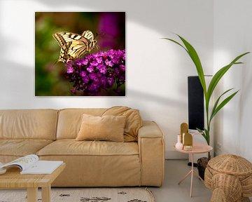 koningsvlinder van Corné van Lammeren