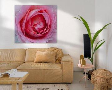 roos met water van Corné van Lammeren