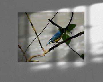 Gekleurde vogel in Iguazu von Lin McQueen