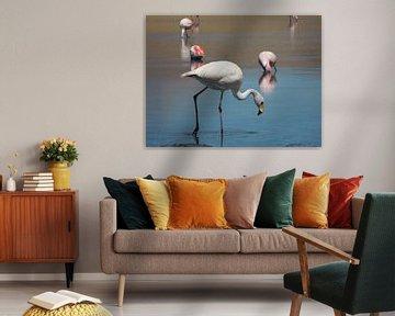 Flamingo in Laguna Cañapa Bolivia  van Lin McQueen