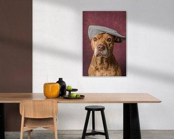 Lieve oude Pitbull portret hond met een petje op  von R Alleman