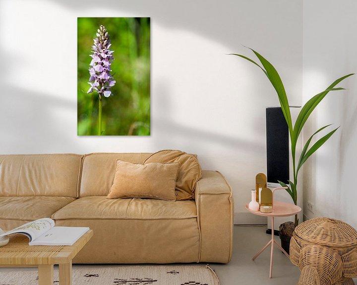 Sfeerimpressie: orchis majalis in botanical garden holland van Compuinfoto .