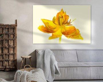 """Kunstwerk """"Gelbe Tulpenblüte"""" von Monika Scheurer"""