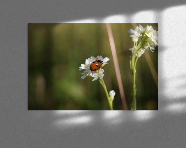 Sfeerimpressie: Lieveheersbeestje  van Danny Kok