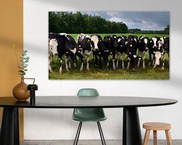 Nieuwsgierige koeien op een rij van Jessica Berendsen