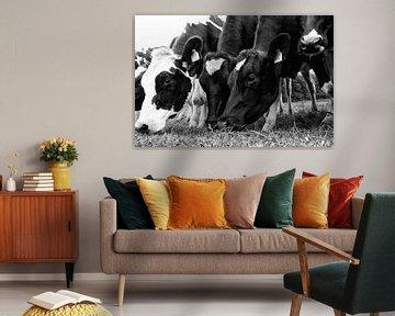 Grazende koeien op een rij van Jessica Berendsen