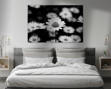 Maddelief bloem von Eva Toes