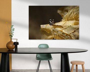 Vlinder op kleedje  von Eva Toes