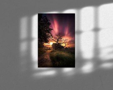 zonsopkomst nationaal park Sallandse heuvelrug von Martijn van Steenbergen