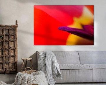 Tulpe Apeldoorn von Peter Sneijders