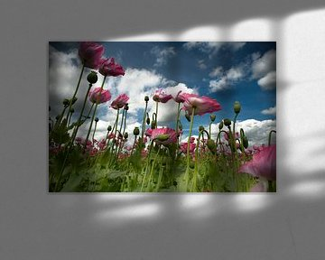 Blowing in de wind von Sonja Pixels