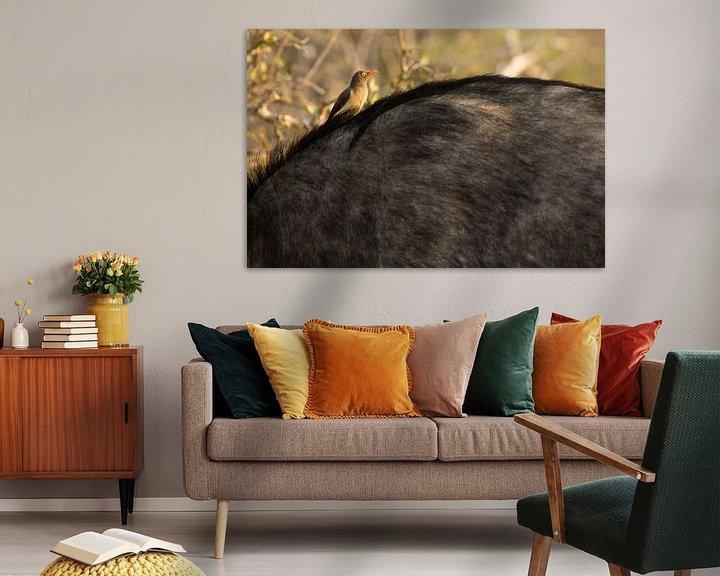 Impression: African Buffalo sur Jasper van der Meij