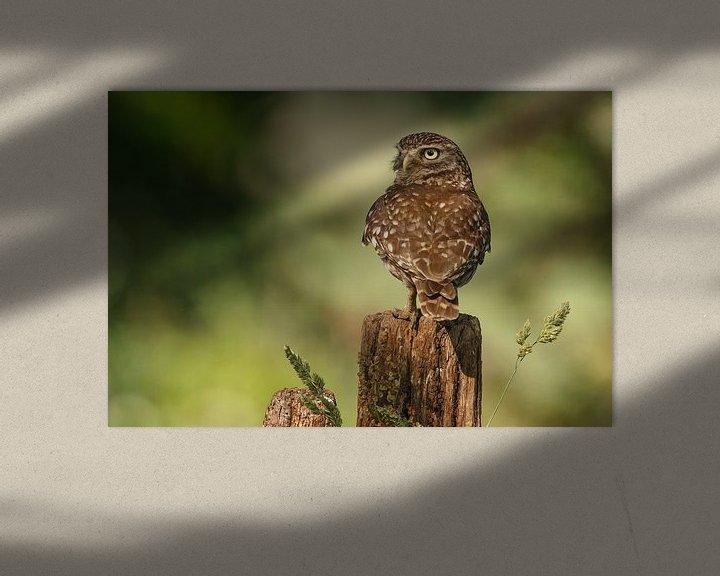 Sfeerimpressie: Steenuil in het late licht van Menno Schaefer