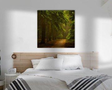 Het magische woud van Jenco van Zalk