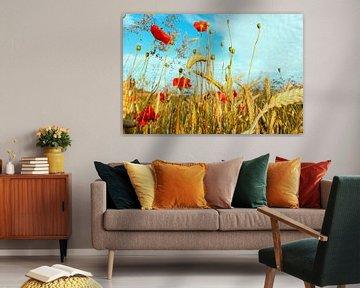 Hochsommer goldgelbes Korn mit rotem Klatschmohn von Tanja Riedel