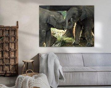 Olifanten in Nepal von Gert-Jan Siesling