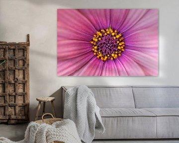 Detail Blume von Michael Roubos