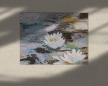 Waterlelies (wit) in een poel van kleur (waterlilies, Lelies)