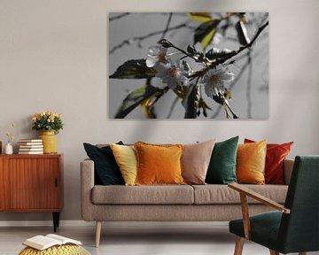 The dark side of the Prunus  von Amber van den Broek