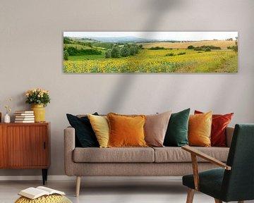 Zonnebloemvelden Zuid-Frankrijk van Corinne Welp
